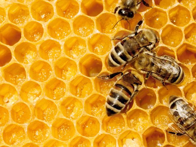 botta-miel-verdon-5