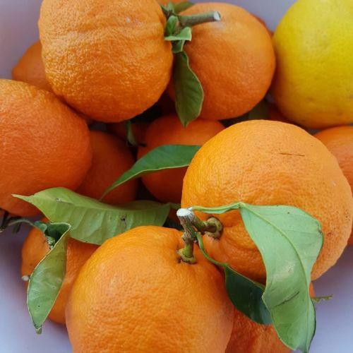 orange-confiture-provence