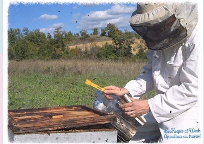 ruche-abeille-1