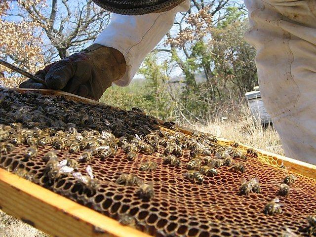 ruche-abeille-3
