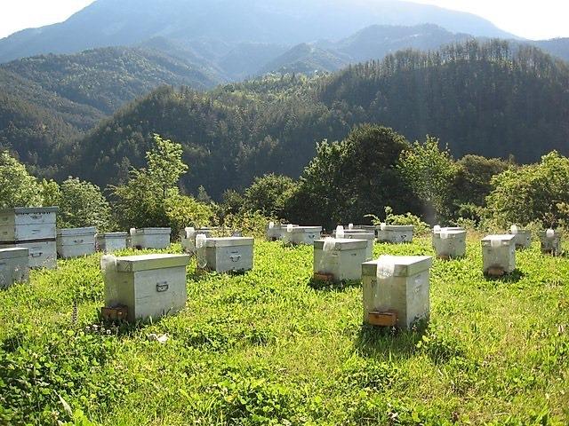 ruche-abeille-4