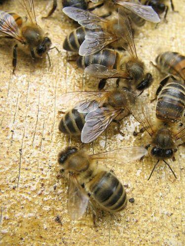ruche-abeille-5