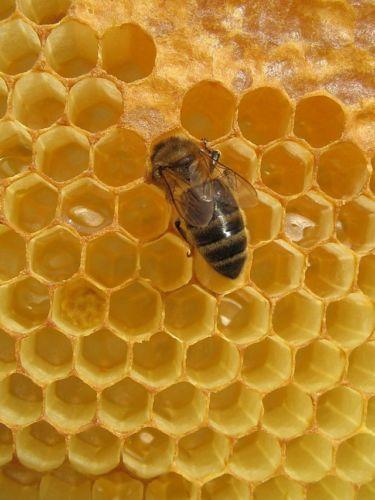 ruche-abeille-6