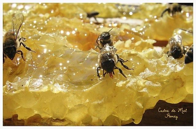 ruche-abeille