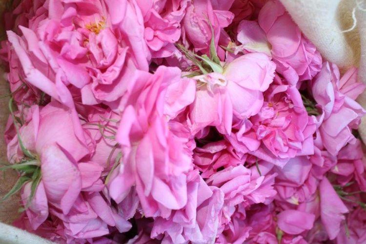 verdon-rose-hydrolat-verdon-10