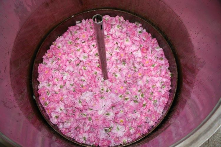 verdon-rose-hydrolat-verdon-8